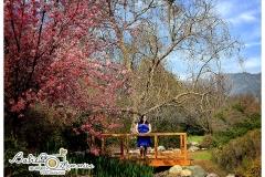 arboretum-maternity-session-05